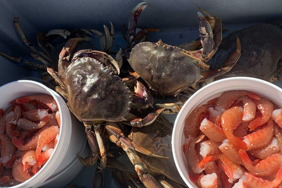 Dungeness Crabs and Spot Prawns
